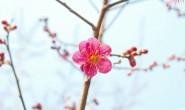 最长春节假期,累了倦了看看武汉直播造医院!